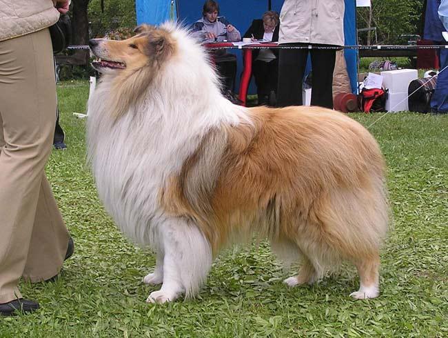 картинки собак всех пород по одному.